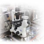Microscope in Tissue Engineering