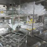 Modular Sterility Testing Isolator_Internal Transfer Tray